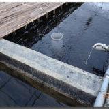 メダカの飼育水~メダカにとって良い水、強い水とは?~